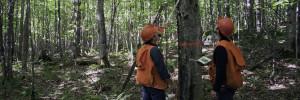 Services-forestiers François Martel 1