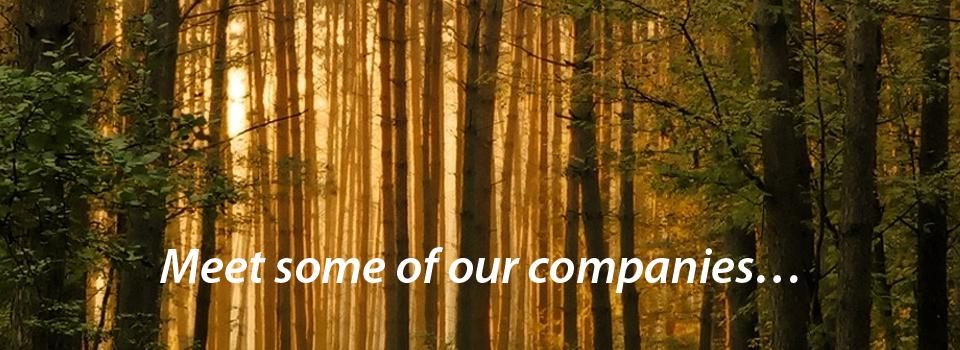 Forest-bandeau-anglais